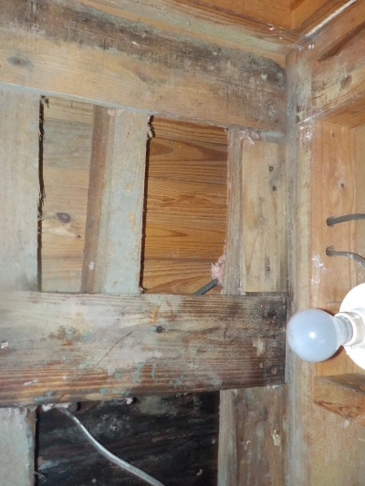 In home mold   Mold Repair Dependable Remediation Services Augusta GA