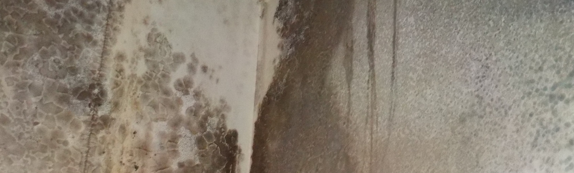 Black Mold Removal Mold remediation   Dependable Remediation Services